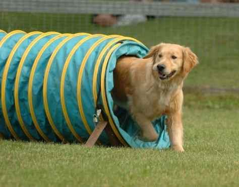 smart-dog-training-agility-e1428397878420