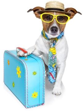 isolated-dog-suitcase