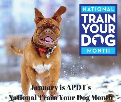 train your dog month